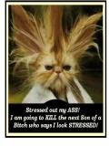 Poze Pisici Stresate