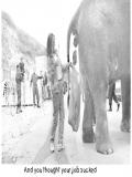 Imagini Elefant, Elefanti