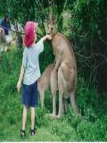 Imagini Cu Animale