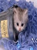 Poze Pisicute Micute