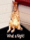 Poze Cu Pisica