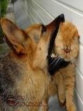 Imagini Pentru Avatare Cu Animalute