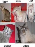 Poze Cu Pisici Faine