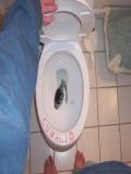 Ce Gasesti In WC