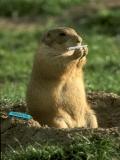 Un Hamster Frumusel
