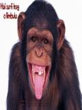 O Maimuta Haslie