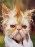 Poze Pisici Amuzante