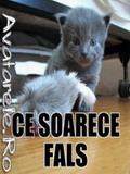 Avatare Cu Pisici Si Soricei