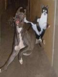 Poze Cu Caini Si Pisici