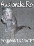 Pisica Persana