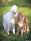 Poze Cu Animale