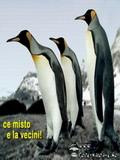 Poze Cu Pinguini