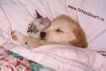 Poze Cu Pisici Si Catei