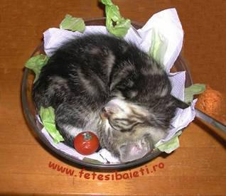 Poze Si Imagini Cu Pisici