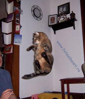 Poze Cu Pisici Matrix 2020