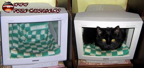 Poze Pisici In Calc