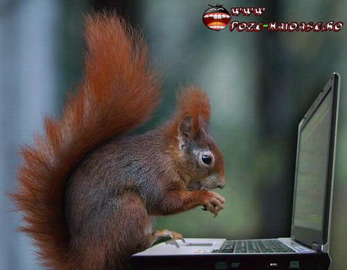Laptop Ieftin Cu Veverita