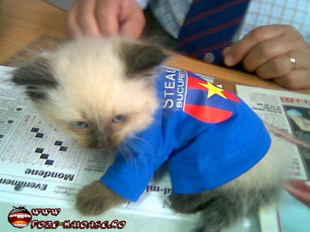pisici haioase iti ureaza multi ani poze mesaje felicitari