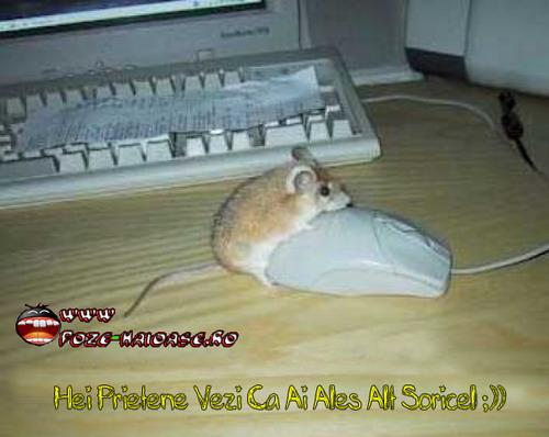 Poze Cu Soricelu Pe Mouse