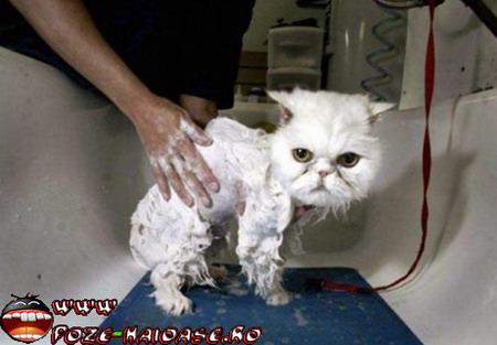 O Pisica Spalata