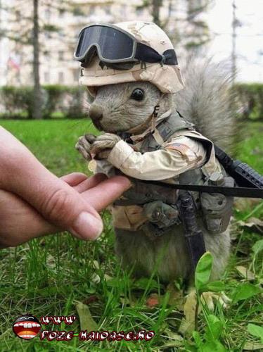 Jocuri Cu Soldati