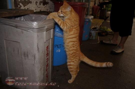 Related Pictures pisica emo haioasa poze haioase animale