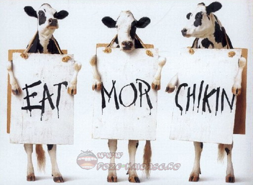 Si Vacile Protesteaza