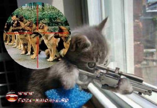 Caini Si Pisici In Poze