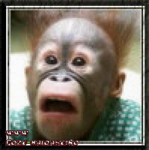 O Maimuta Speriata