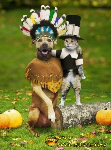 Caini, Pisici In Costum De Carnaval