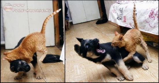 Caini Si Pisici