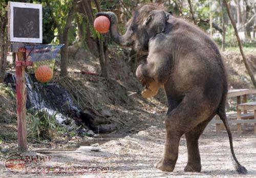 Un Elefant Tare Destept