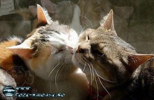 Poze Cu Pisici Dragute