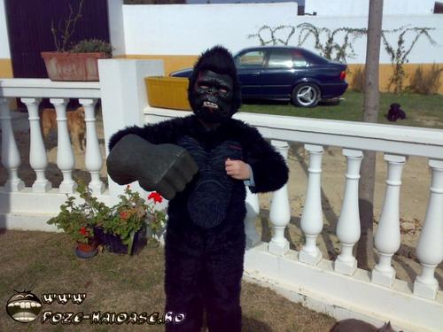 Poze Gorila