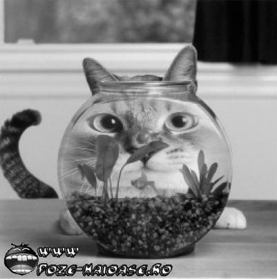 Pisica Si Pestisoru 2020